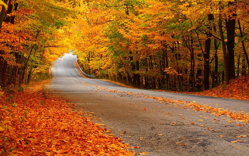 Γιατί κιτρινίζουν τα φύλλα το φθινόπωρο;