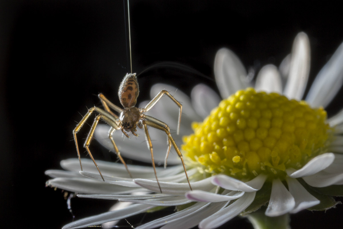 Οι αράχνες χρησιμοποιούν ηλεκτρισμό για να πετάνε