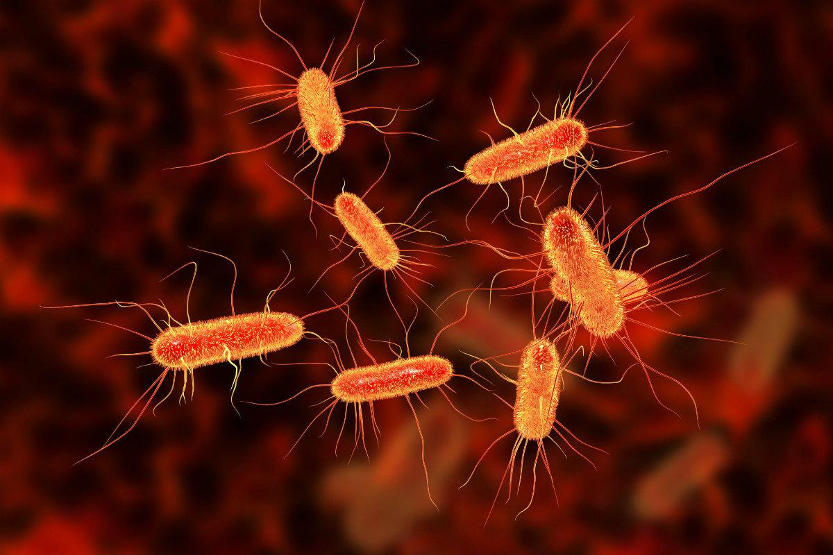 Η E. coli δε μας προκαλεί μόνο δηλητηρίαση. Μας βοηθά να προσλάβουμε Σίδηρο