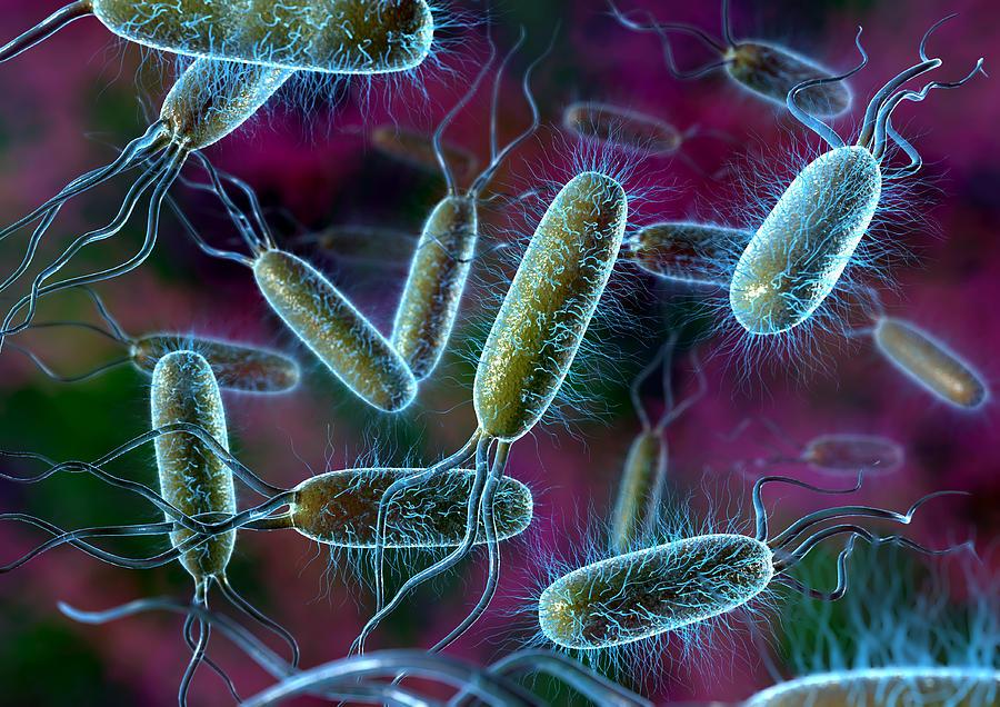 Αποτέλεσμα εικόνας για βακτήριο