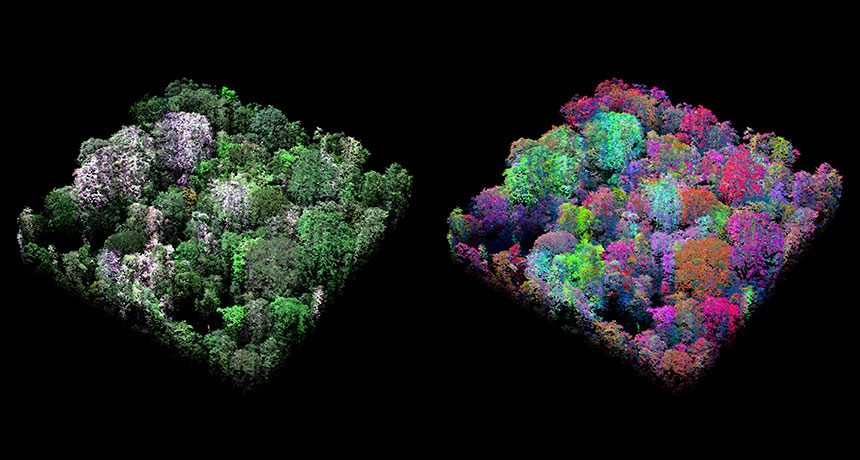 36 είδη δασών φιλοξενεί το δάσος του Αμαζονίου
