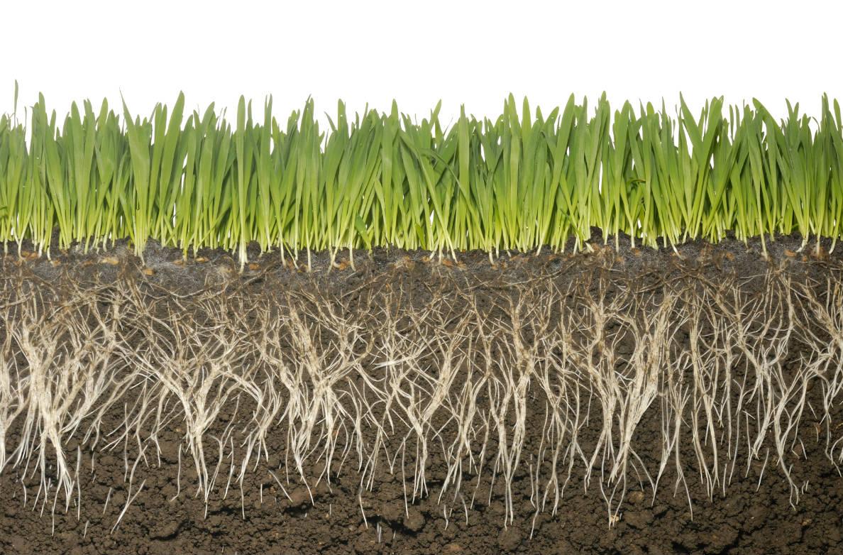 Τα φυτά ταΐζουν μόνο τα μικρόβια που θέλουν