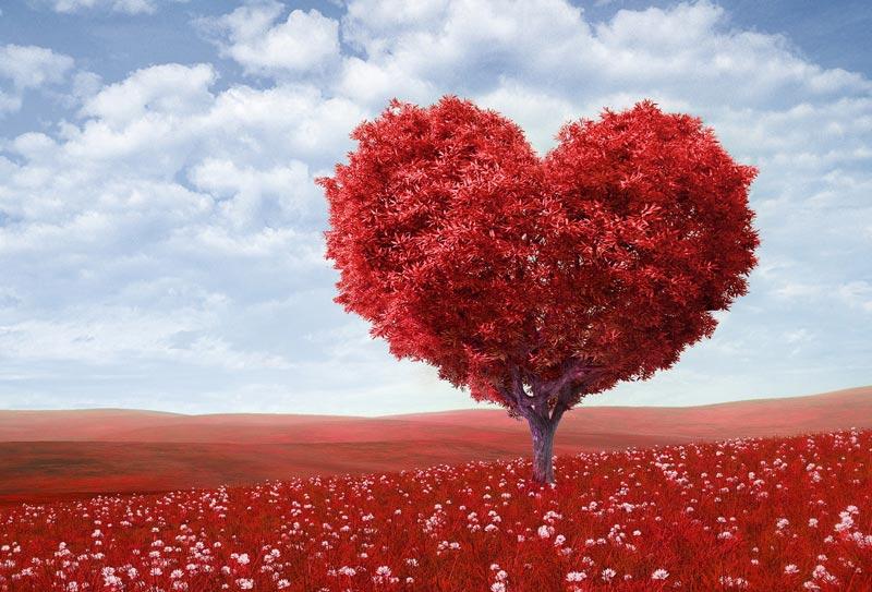 Τα μυστικά της καρδιάς