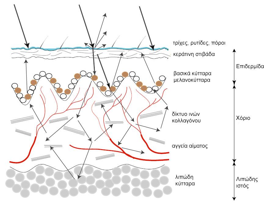 ραδιοϊσοτόπων σε χρονολόγηση διοξειδίου του άνθρακα